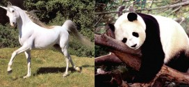 Denmark unveils plans to eviscerate pandas and unicorns next