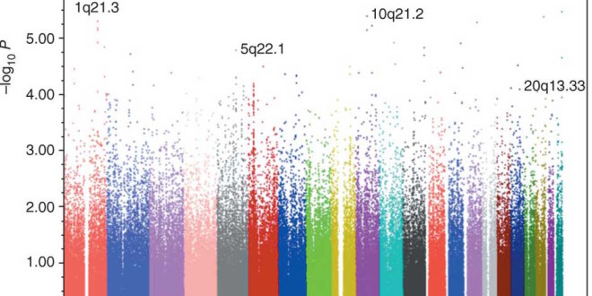 GWAS Study Finds Increased Risk Of Death Among Older People