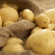 USDA Approves Growing of DNA-Free Potatoes